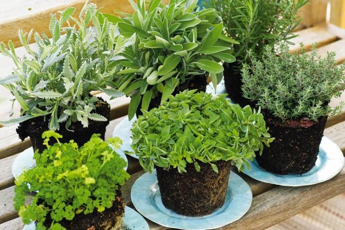 Tuin op tafel plantencentrum louis venhorst zn