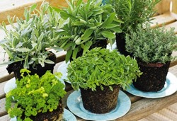 Tuin op tafel plantencentrum louis venhorst & zn.